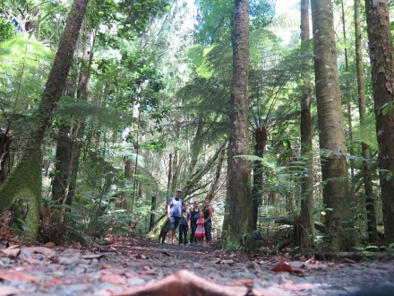 5 kauri forest (1)
