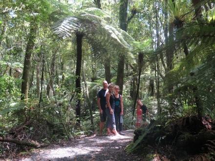 5 kauri forest (2)