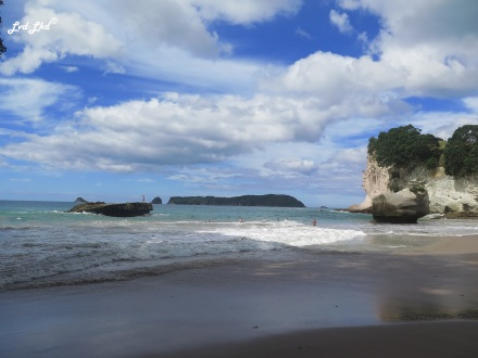 4 cathedral cove (6)