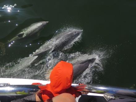 8 dauphins milford (2)
