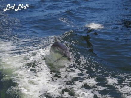8 dauphins milford (3)