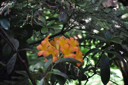4 royal botanic garden (4)