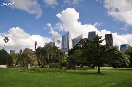 4 royal botanic garden (6)