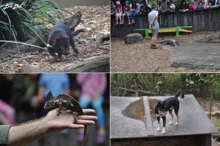 5 reptil park (1)