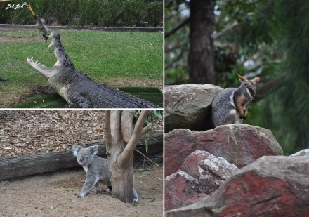 5 reptil park (5)