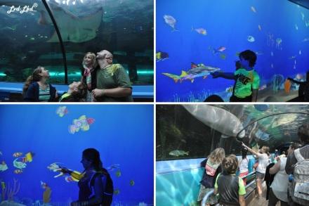 6 Aquarium Sydney (5)