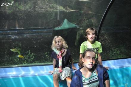 6 Aquarium Sydney (6)