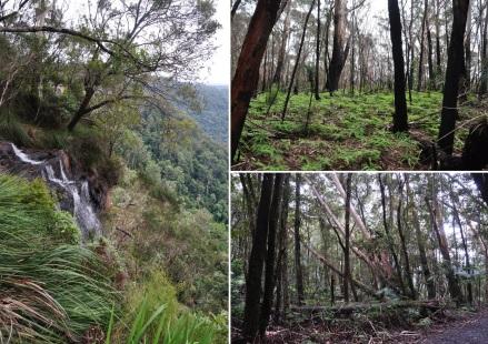 5 springbrook falls (2)