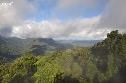 6 Dorrigo Rainforest (2)