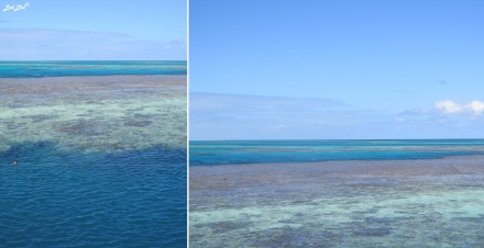 6 plateforme great reef (1)