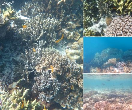 8 snorkeling (1)