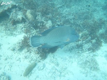 8 snorkeling (19)