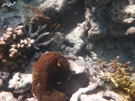 8 snorkeling (3)