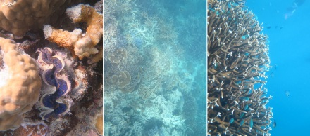 8 snorkeling (4)