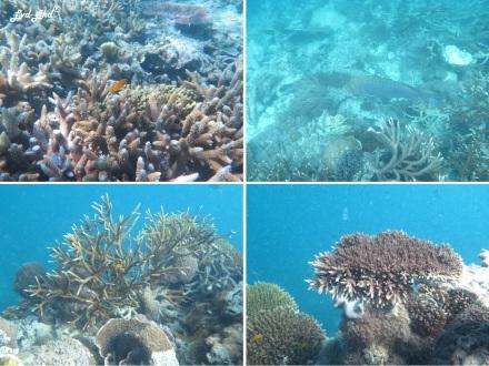 8 snorkeling (7)