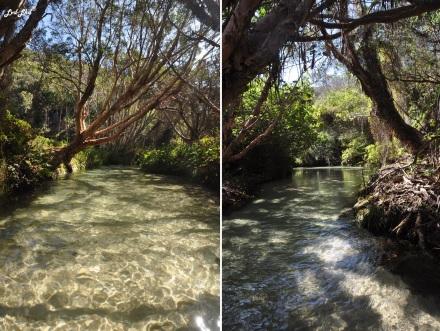 9 Eli Creek (4)
