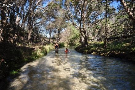 9 Eli Creek (7)