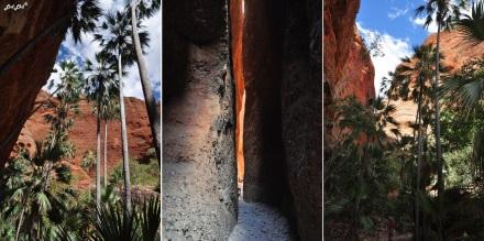 6 echidna chasm (2)