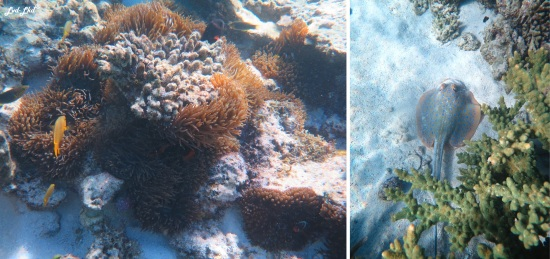 6 oyster stacks ningaloo reef (2)