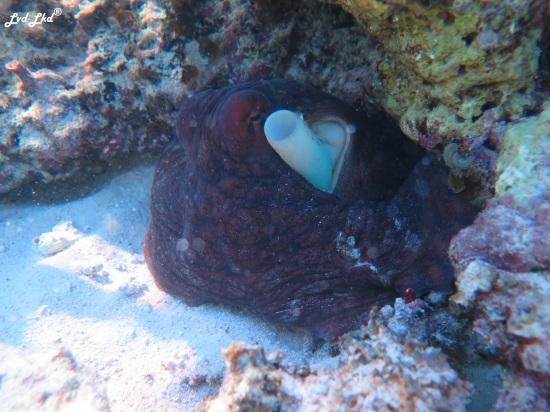 6 oyster stacks ningaloo reef (4)