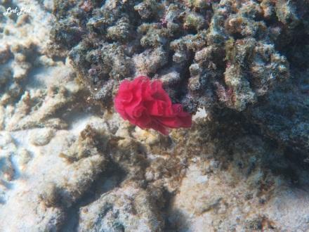 6 oyster stacks ningaloo reef (5)