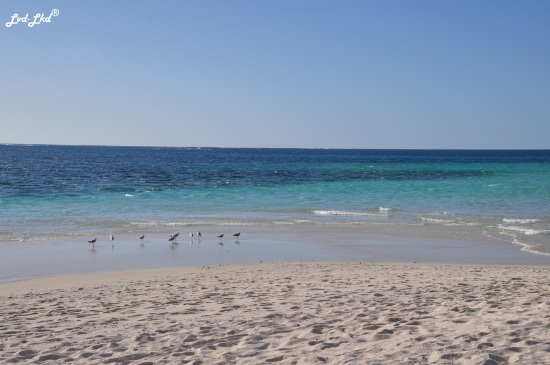 8 Turquoise bay (4)