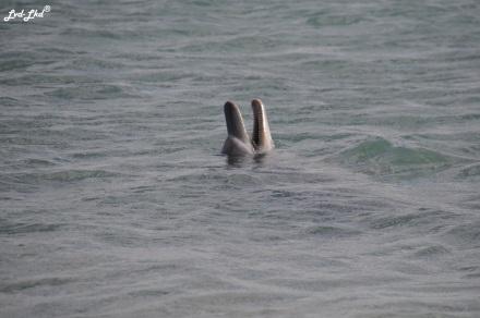 1 dauphins monkex mia (1)