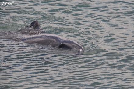 1 dauphins monkex mia (2)