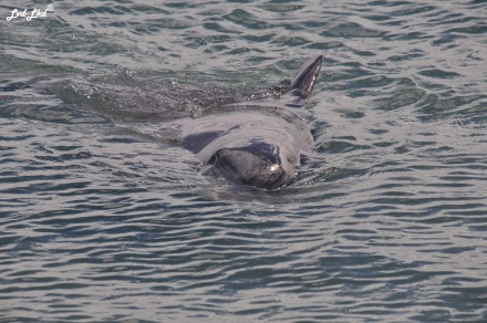 1 dauphins monkex mia (3)