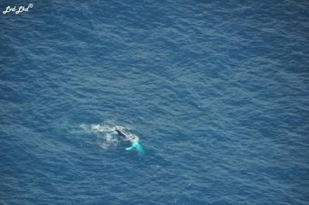 4 baleines (1)