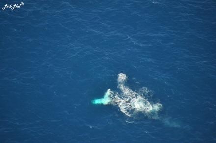 4 baleines (3)