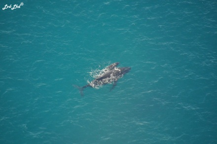 4 baleines (4)
