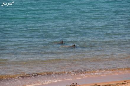 7 dauphins et landscape (4)