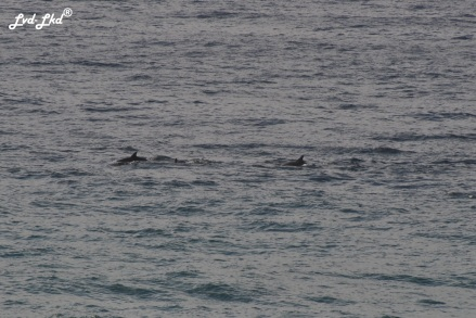 9 Dauphins (2)
