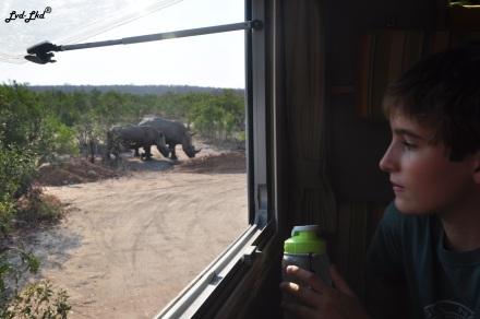 10-rhino-proche-1