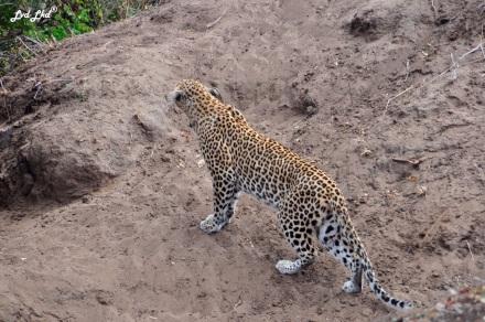 12-leopard-2