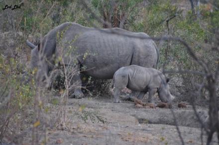 13-bebe-rhino