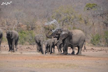 2-elephants-1