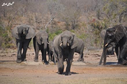 2-elephants-2