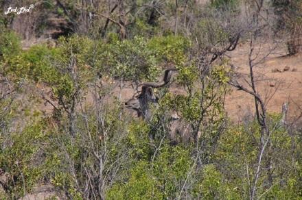 2-kudu