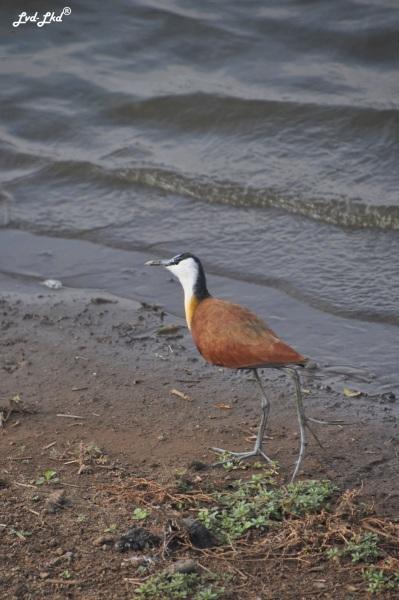 2-oiseaux-1