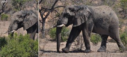 3-elephant-2