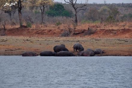 5-buffles-et-elephants-3