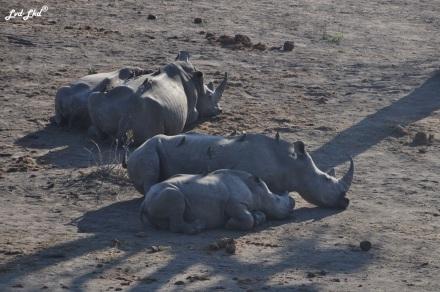5-rhino-2