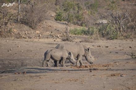 5-rhino-3