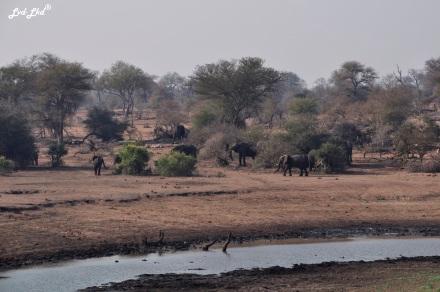 7-elephants-2