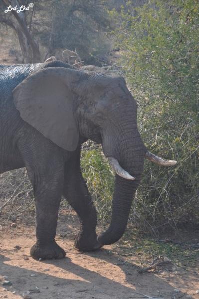 7-elephants-3