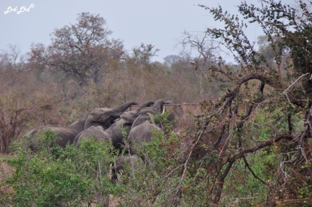 7-elephants