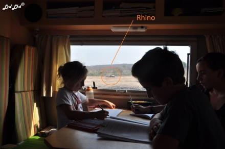 9-rhino-piscine