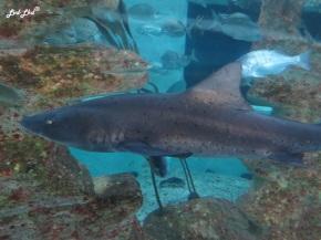 9-aquarium-swakopmund-1